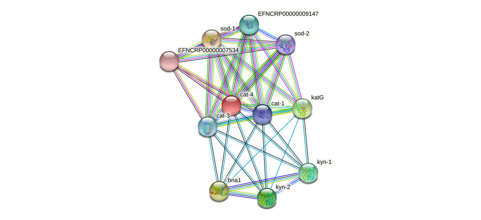 cat-4 protein (Neurospora crassa) - STRING interaction network