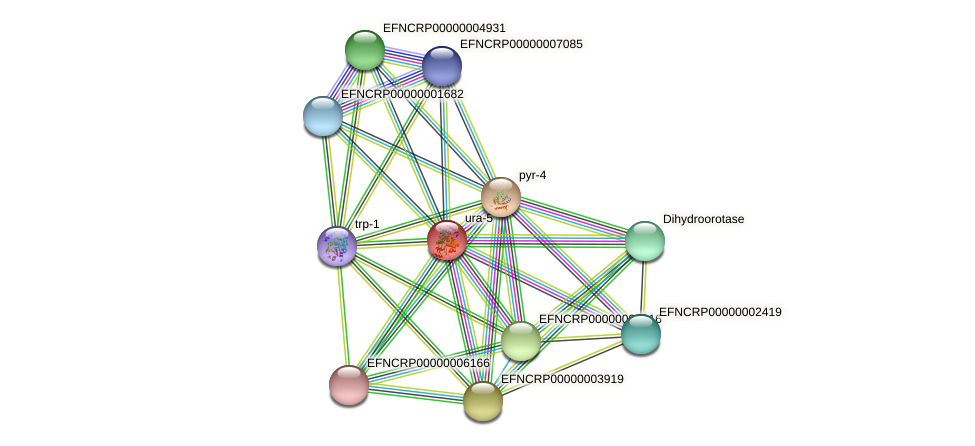 EFNCRP00000004986 protein (Neurospora crassa) - STRING interaction network