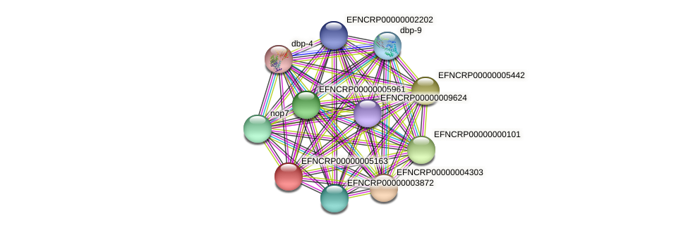 EFNCRP00000005163 protein (Neurospora crassa) - STRING interaction network