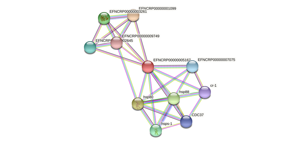 EFNCRP00000005167 protein (Neurospora crassa) - STRING interaction network