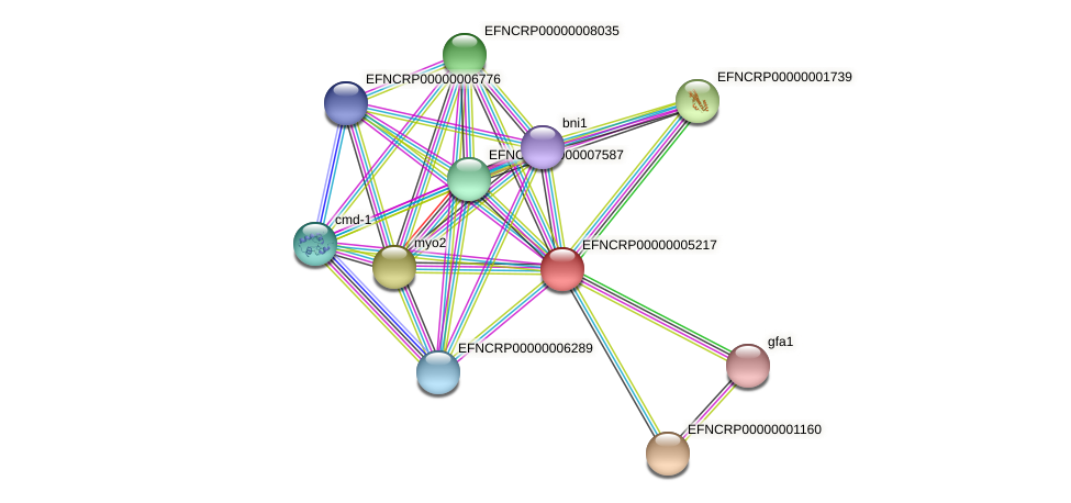 EFNCRP00000005217 protein (Neurospora crassa) - STRING interaction network
