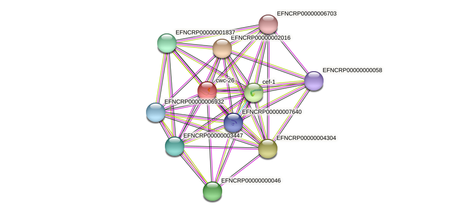 EFNCRP00000005232 protein (Neurospora crassa) - STRING interaction network