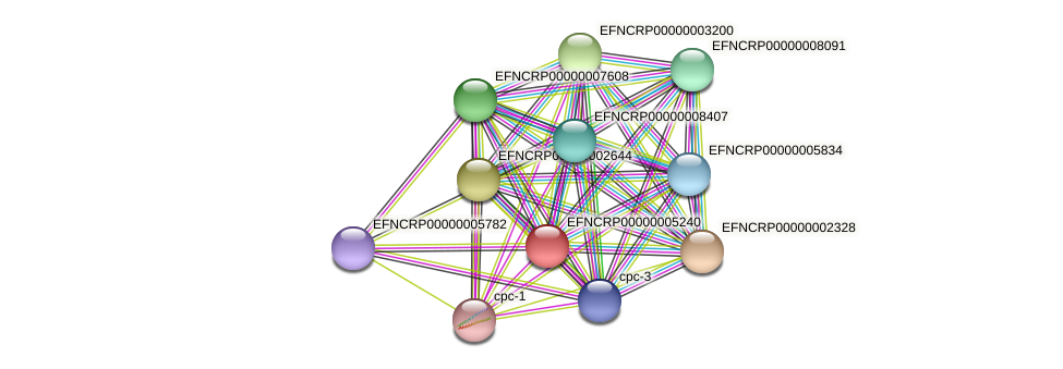 EFNCRP00000005240 protein (Neurospora crassa) - STRING interaction network