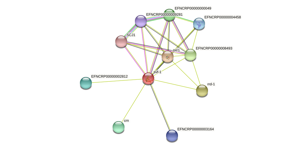 EFNCRP00000005275 protein (Neurospora crassa) - STRING interaction network