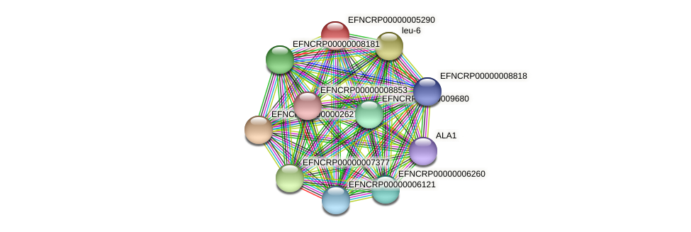 EFNCRP00000005290 protein (Neurospora crassa) - STRING interaction network