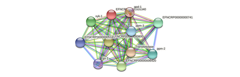 EFNCRP00000005340 protein (Neurospora crassa) - STRING interaction network
