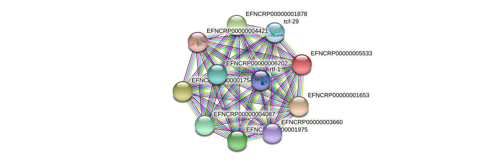 EFNCRP00000005533 protein (Neurospora crassa) - STRING interaction network
