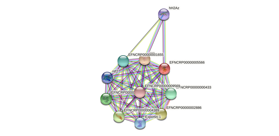 EFNCRP00000005566 protein (Neurospora crassa) - STRING interaction network