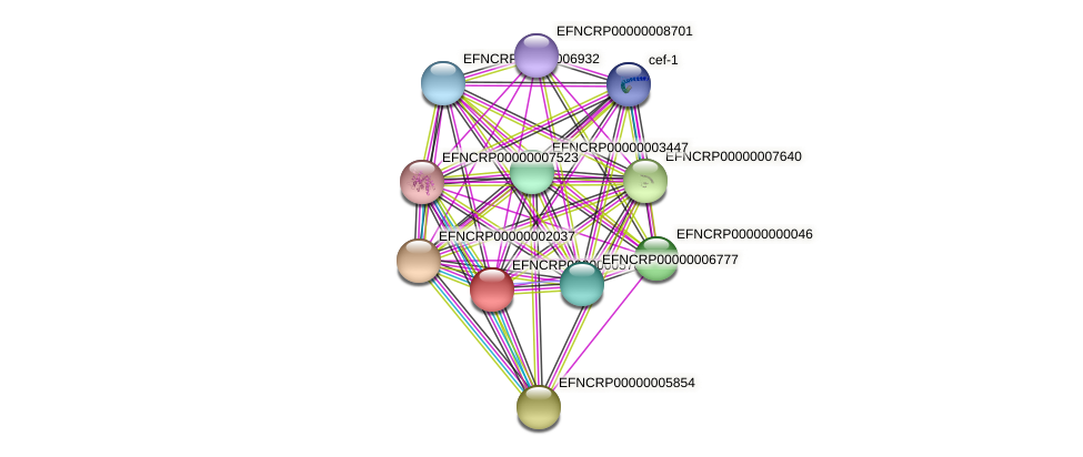 EFNCRP00000005781 protein (Neurospora crassa) - STRING interaction network