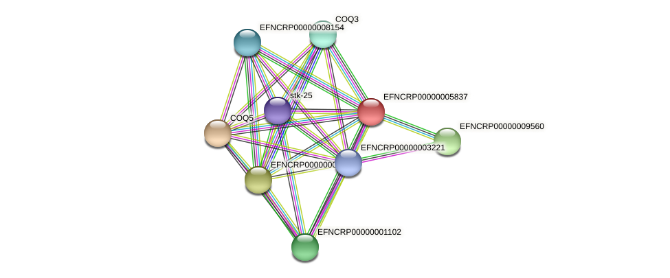 EFNCRP00000005837 protein (Neurospora crassa) - STRING interaction network
