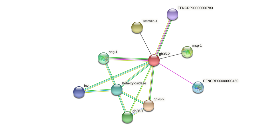 gh35-2 protein (Neurospora crassa) - STRING interaction network