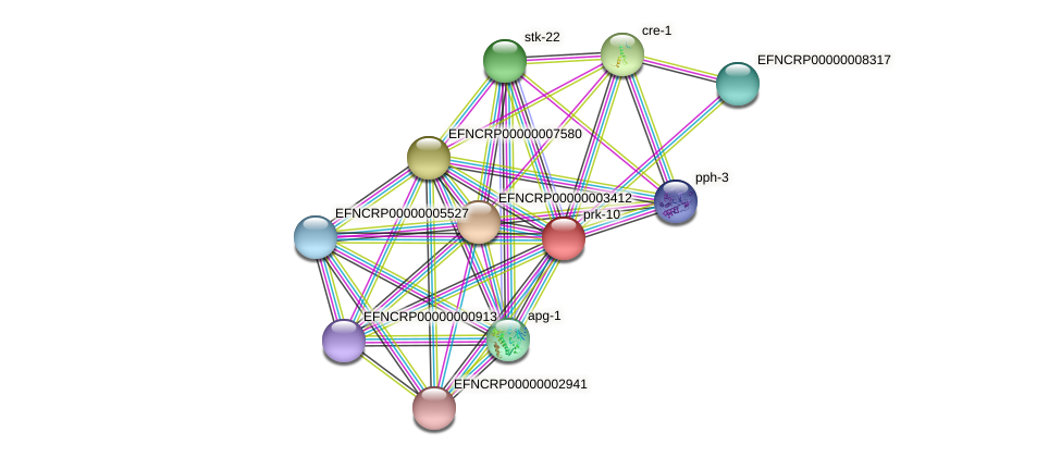 prk-10 protein (Neurospora crassa) - STRING interaction network