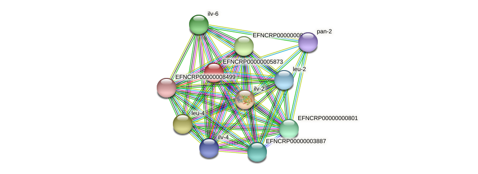 80A10.170 protein (Neurospora crassa) - STRING interaction network