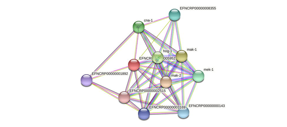 EFNCRP00000005952 protein (Neurospora crassa) - STRING interaction network