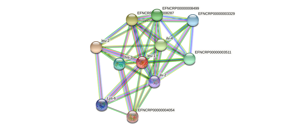 leu-1 protein (Neurospora crassa) - STRING interaction network