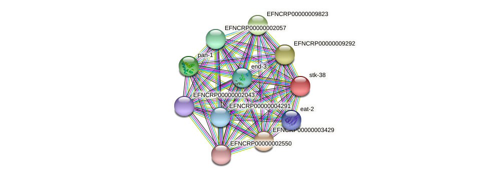 stk-38 protein (Neurospora crassa) - STRING interaction network