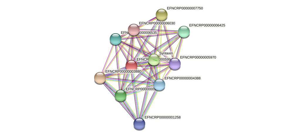 EFNCRP00000005994 protein (Neurospora crassa) - STRING interaction network