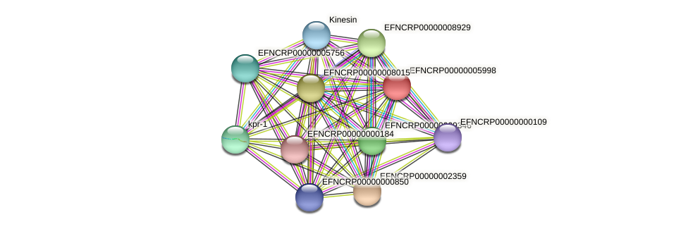 EFNCRP00000005998 protein (Neurospora crassa) - STRING interaction network