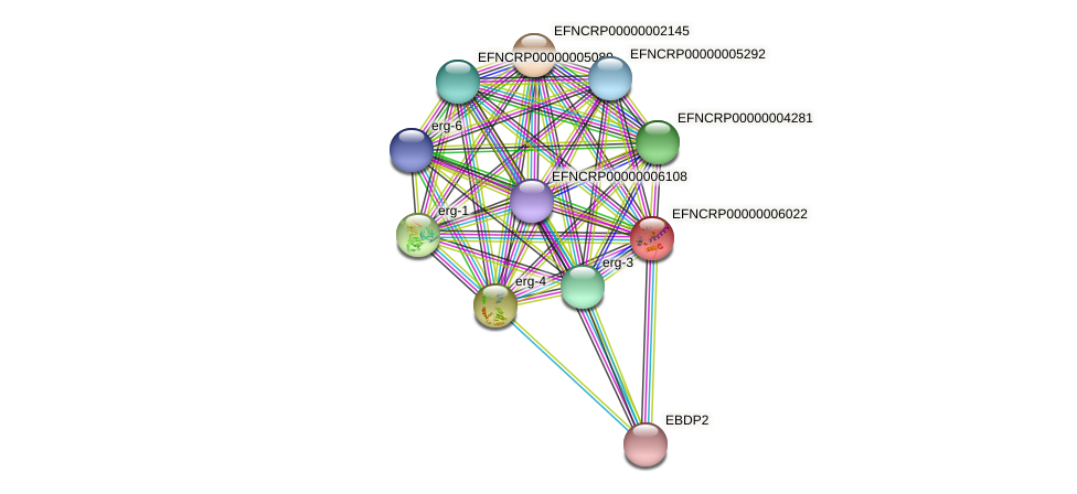 EFNCRP00000006022 protein (Neurospora crassa) - STRING interaction network