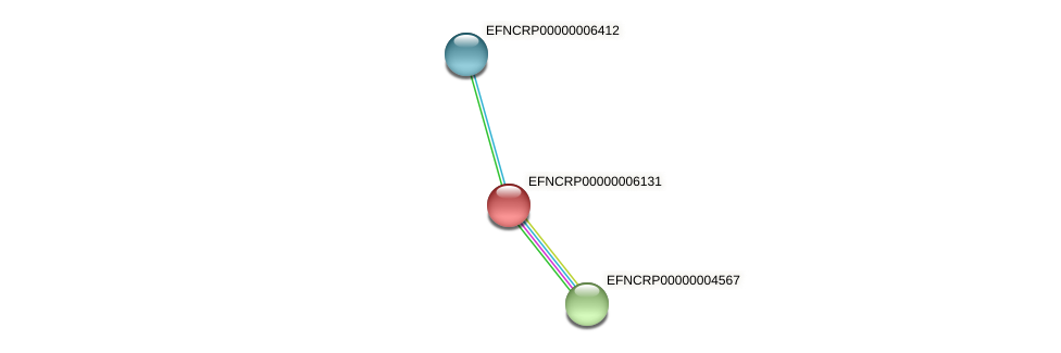 EFNCRP00000006131 protein (Neurospora crassa) - STRING interaction network