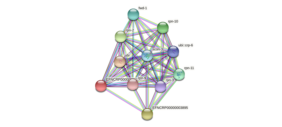 EFNCRP00000006159 protein (Neurospora crassa) - STRING interaction network