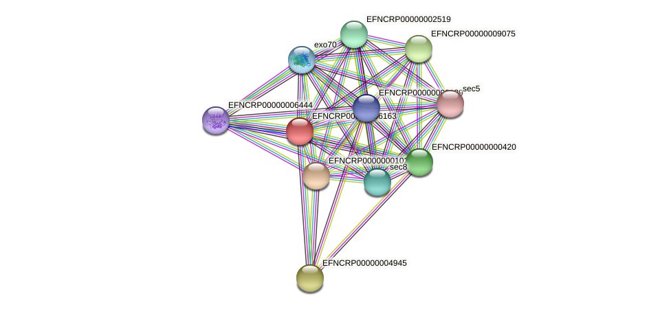 EFNCRP00000006163 protein (Neurospora crassa) - STRING interaction network