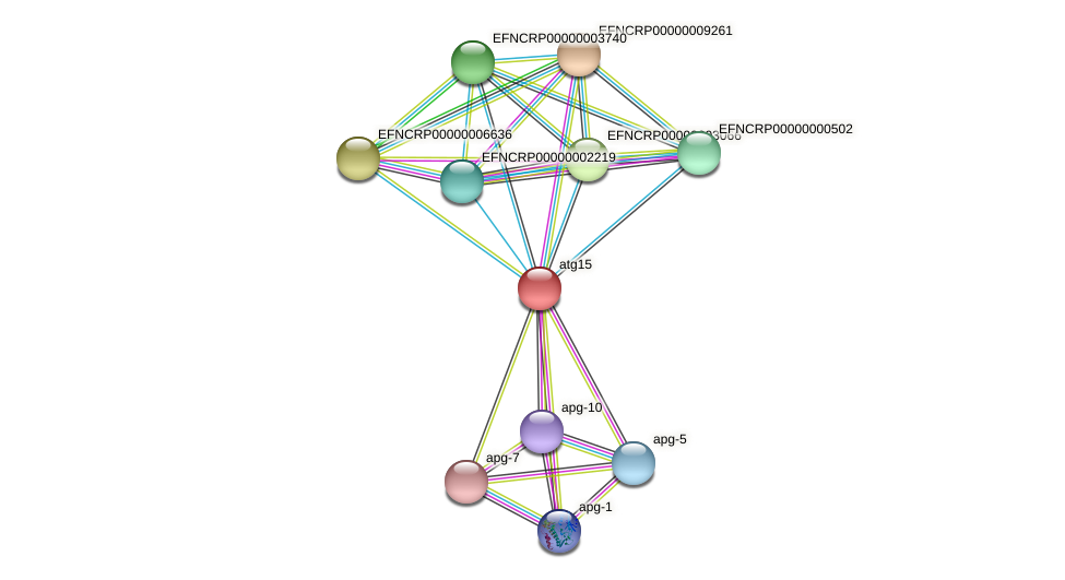EFNCRP00000006218 protein (Neurospora crassa) - STRING interaction network