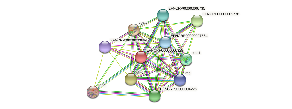 EFNCRP00000006329 protein (Neurospora crassa) - STRING interaction network