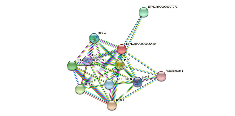 EFNCRP00000006420 protein (Neurospora crassa) - STRING interaction network