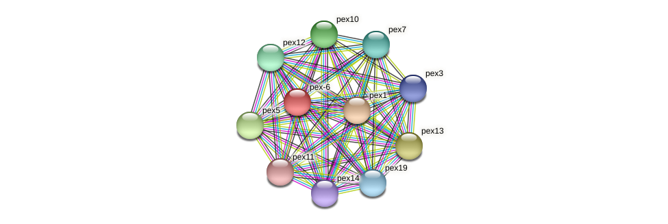 pex6 protein (Neurospora crassa) - STRING interaction network