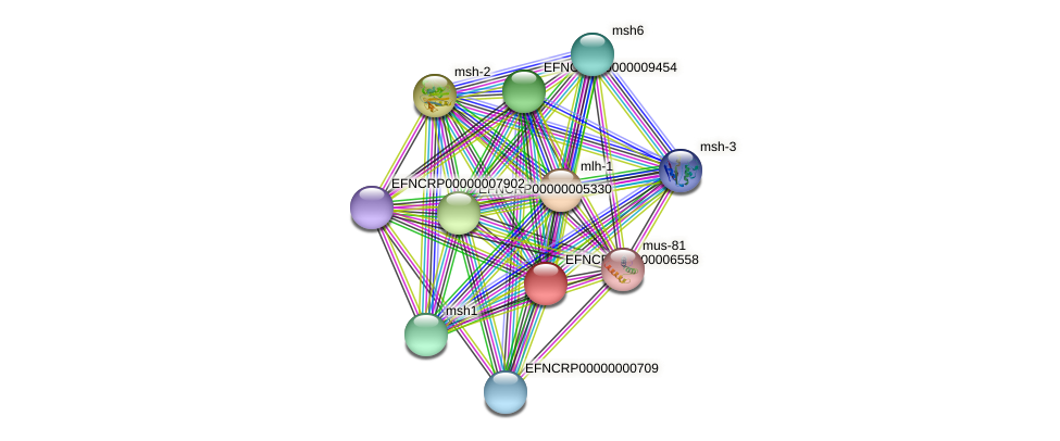 EFNCRP00000006558 protein (Neurospora crassa) - STRING interaction network