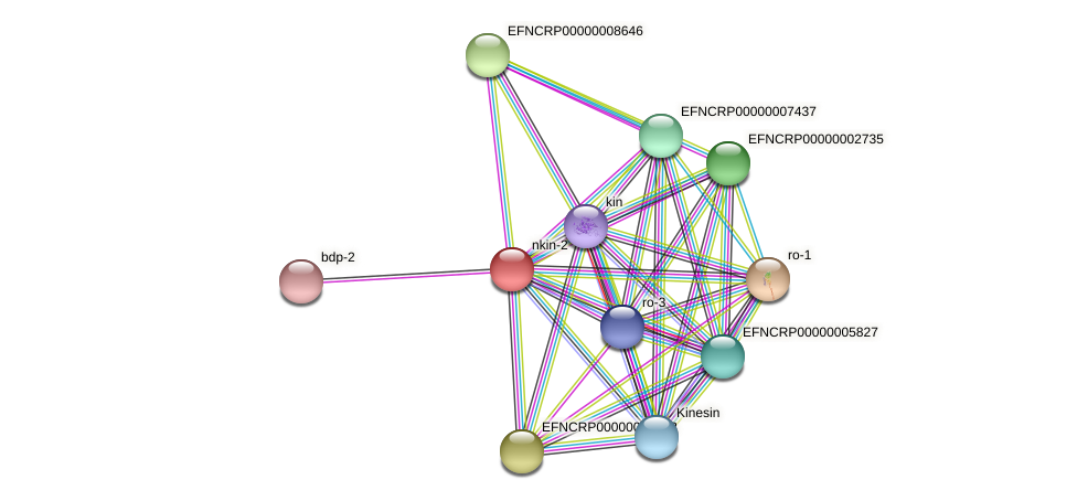 nkin-2 protein (Neurospora crassa) - STRING interaction network
