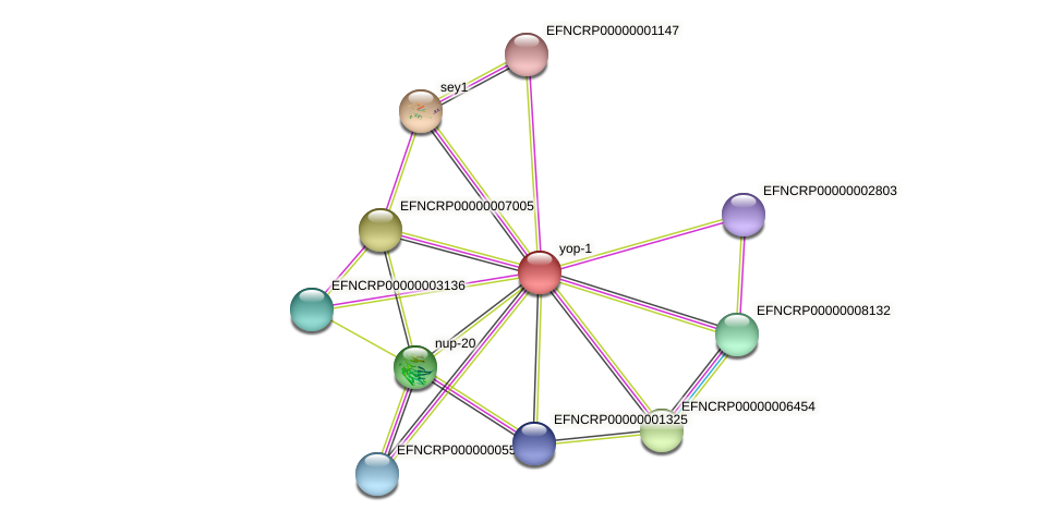 EFNCRP00000006618 protein (Neurospora crassa) - STRING interaction network