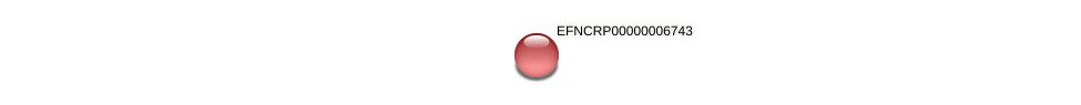 EFNCRP00000006743 protein (Neurospora crassa) - STRING interaction network