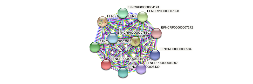 EFNCRP00000006848 protein (Neurospora crassa) - STRING interaction network