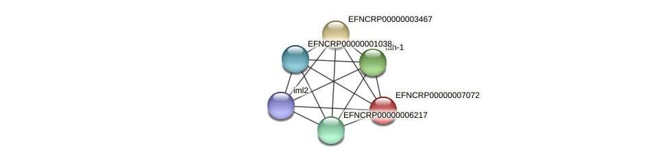 EFNCRP00000007072 protein (Neurospora crassa) - STRING interaction network