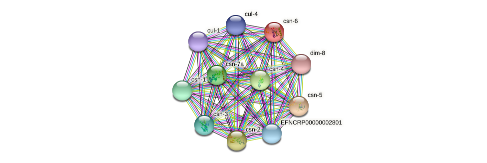 csn-6 protein (Neurospora crassa) - STRING interaction network