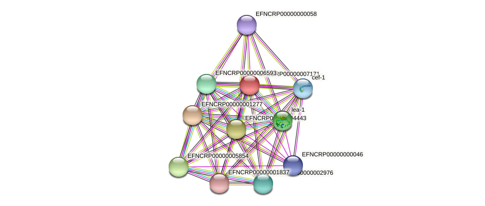 EFNCRP00000007171 protein (Neurospora crassa) - STRING interaction network