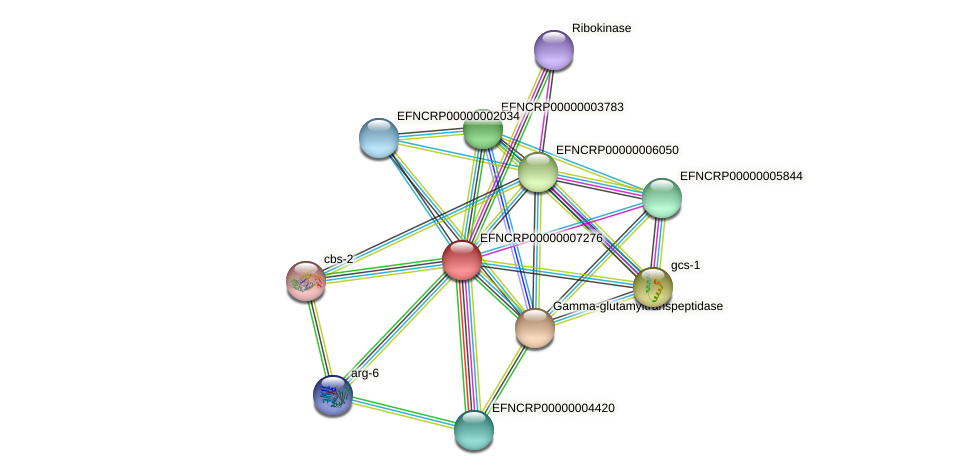 EFNCRP00000007276 protein (Neurospora crassa) - STRING interaction network