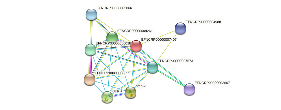 EFNCRP00000007407 protein (Neurospora crassa) - STRING interaction network