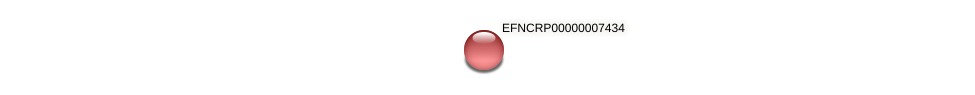 EFNCRP00000007434 protein (Neurospora crassa) - STRING interaction network