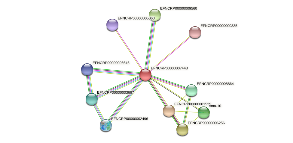 EFNCRP00000007443 protein (Neurospora crassa) - STRING interaction network