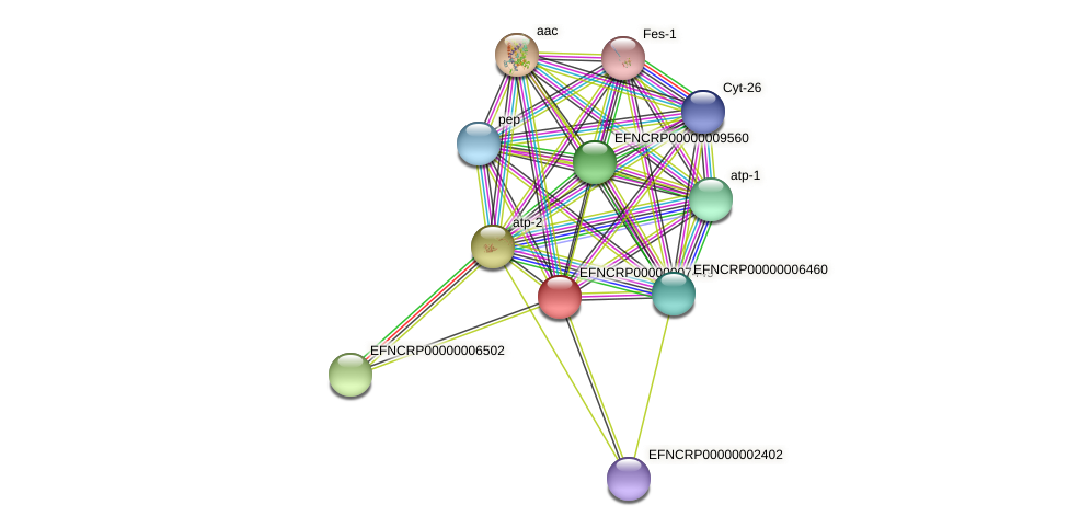 EFNCRP00000007449 protein (Neurospora crassa) - STRING interaction network