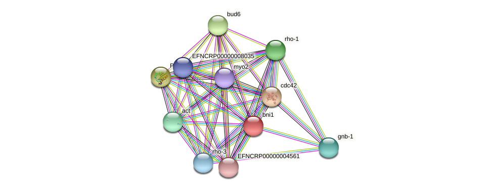 bni1 protein (Neurospora crassa) - STRING interaction network