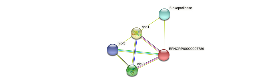 EFNCRP00000007789 protein (Neurospora crassa) - STRING interaction network