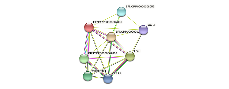 EFNCRP00000007896 protein (Neurospora crassa) - STRING interaction network
