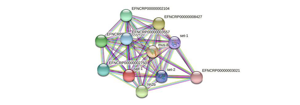EFNCRP00000007905 protein (Neurospora crassa) - STRING interaction network