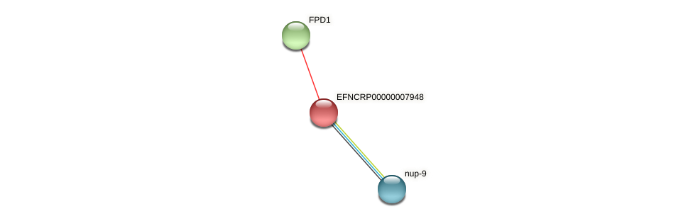 EFNCRP00000007948 protein (Neurospora crassa) - STRING interaction network