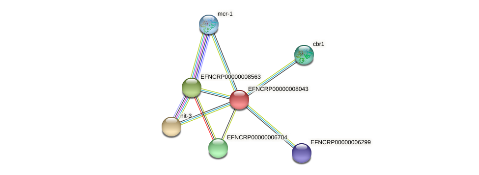 EFNCRP00000008043 protein (Neurospora crassa) - STRING interaction network
