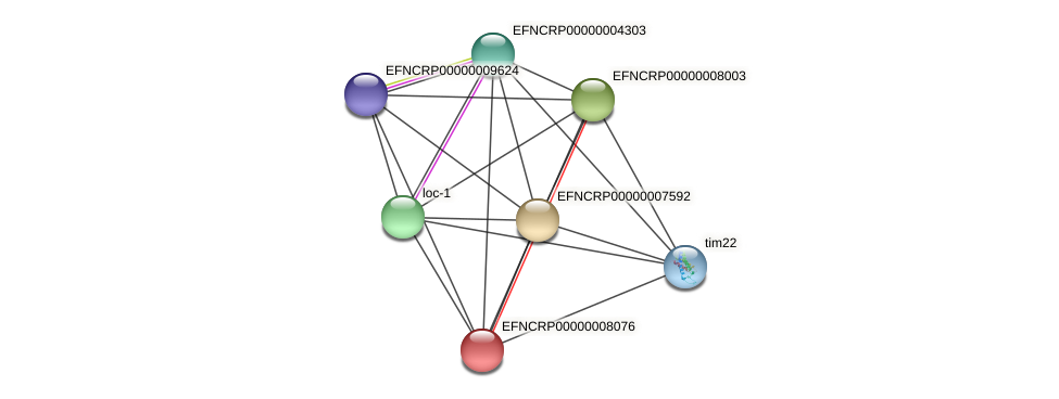 EFNCRP00000008076 protein (Neurospora crassa) - STRING interaction network